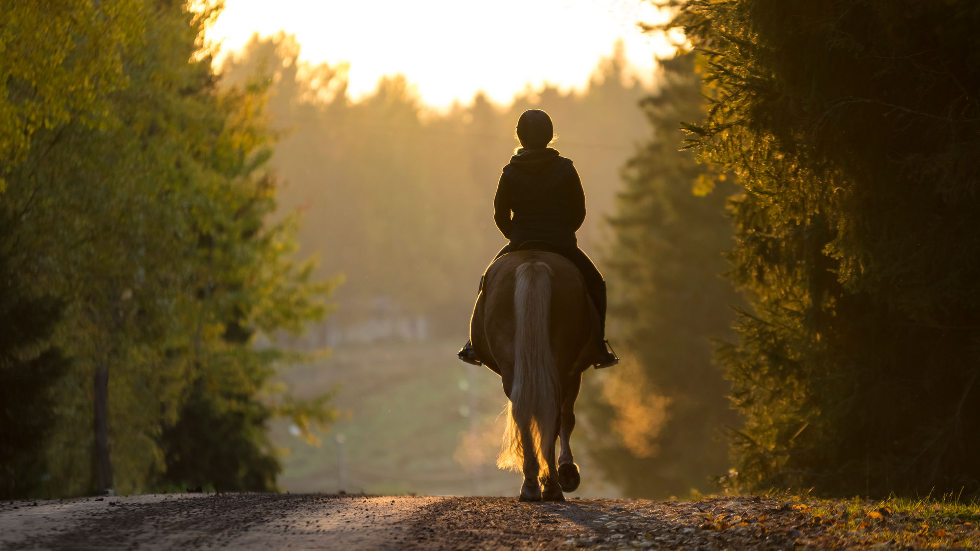 Cotswold Horse Tours ensures you experience the diversity of the of the English equestrian culture
